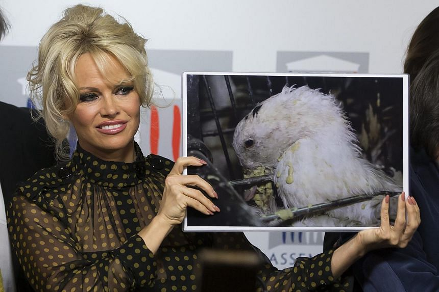Actress Pamela Anderson holding a picture of a force-fed duck during a news conference against the production of foie gras, in Paris, on Jan 19.