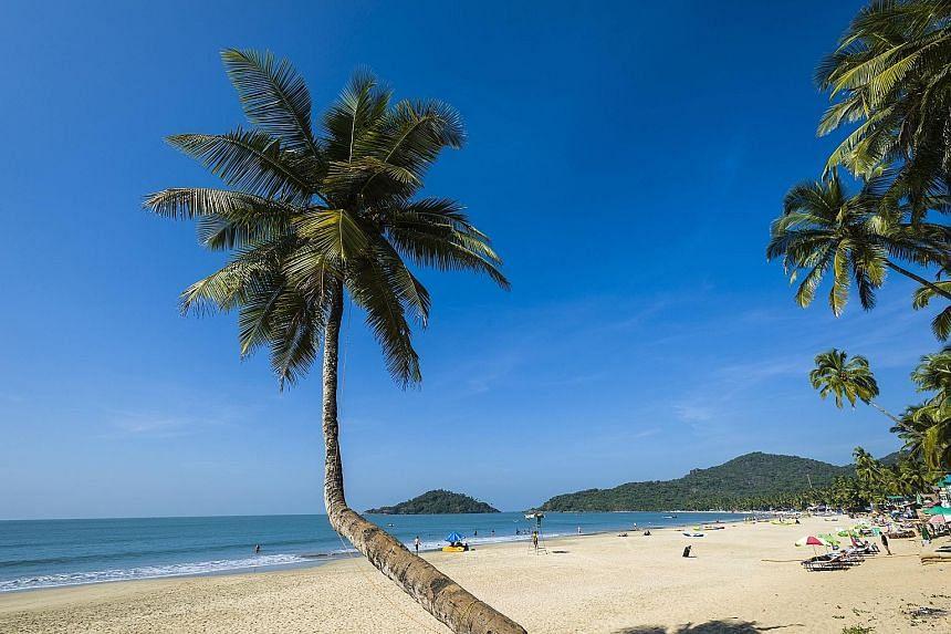 Goa's legislative assembly last week reclassified the coconut tree as a palm.