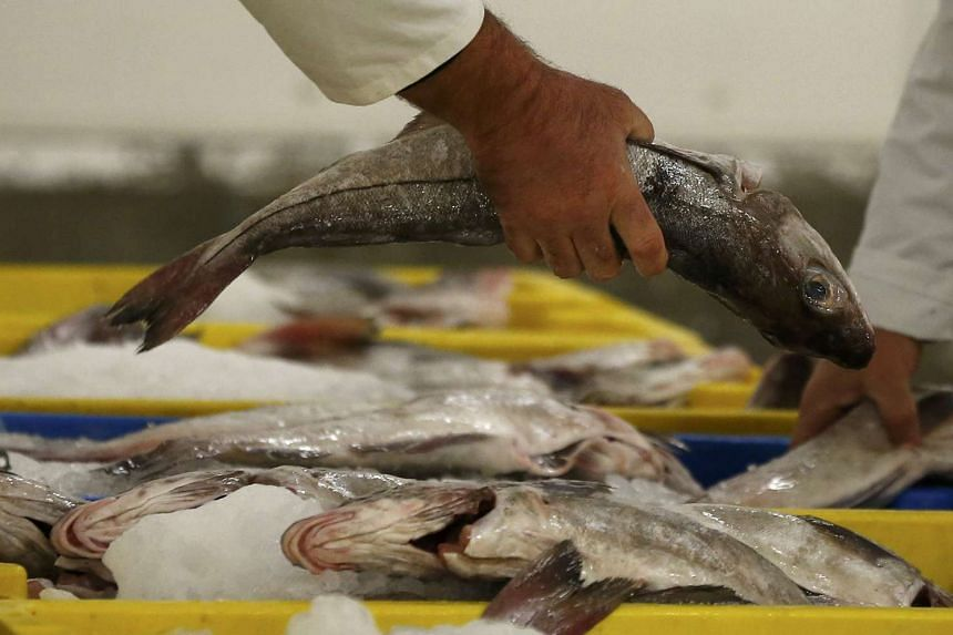 A fish buyer examines a haddock before the start of the daily auction at the fish market in Grimsby, Britain.