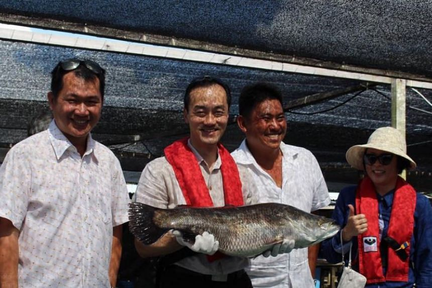 Dr Koh Poh Koon carrying a 10kg sea bass during his visit to one of the fish farms.