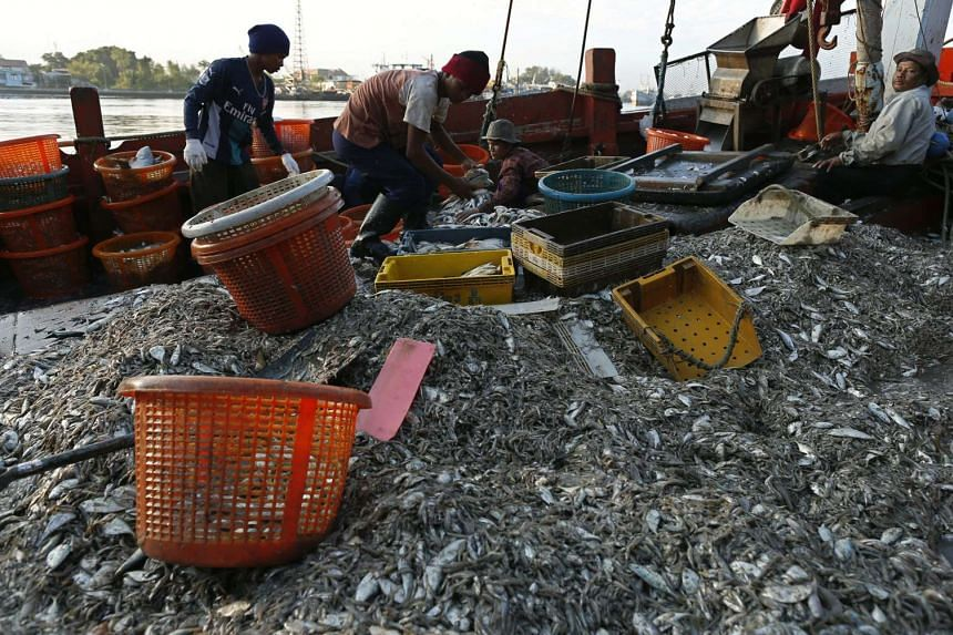 Migrant fishermen unload fish from a Thai fishing boat onto a jetty on Jan 19, 2016.