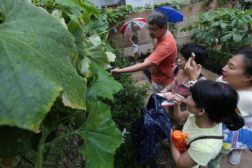 Gardening enthusiasts checking out the winter melon plant at a community garden in Bukit Batok Central. The collective's core team comprises (from left) Suzanna Kusuma, Tan Hang Chong, Ng Huiying and Pui Cuifen. It has more than 700 likes on Facebook