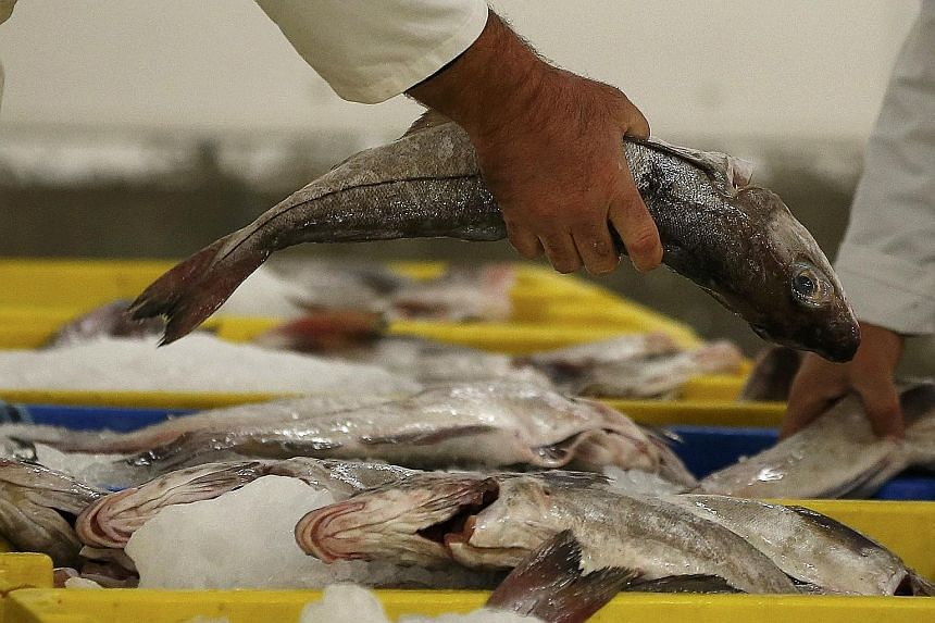 The annual catch has been declining since 1996 at a much faster rate than suggested by FAO data. Rather than the result of catch quotas, the trend may point to stocks running low.