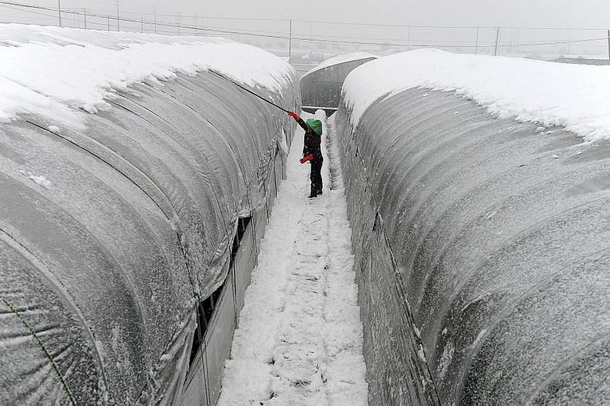 A woman brushing off snow from the top of a greenhouse in Dongyang, east China's Zhejiang province, yesterday.