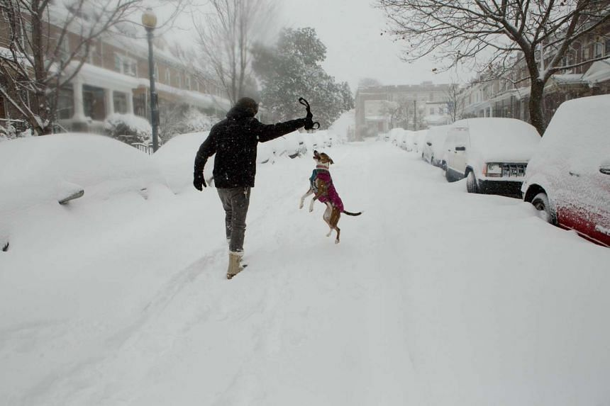 A man takes advantage of an unploughed street to play with his dog in the Parkview neighbourhood of Washington, DC.