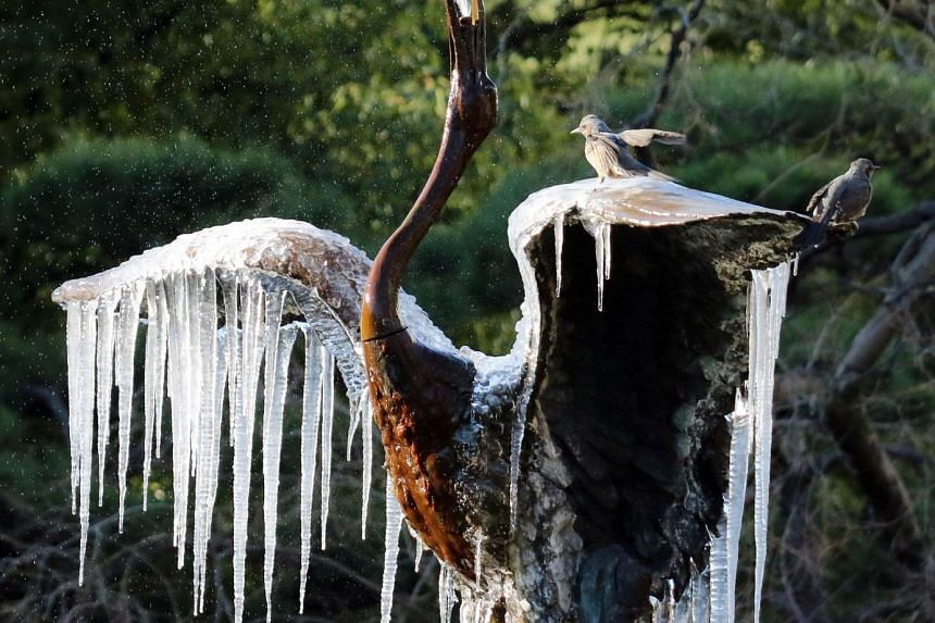 Birds sit on a frozen crane sculpture fountain with icicles hanging from its wings at a Tokyo park on Jan 25, 2016.