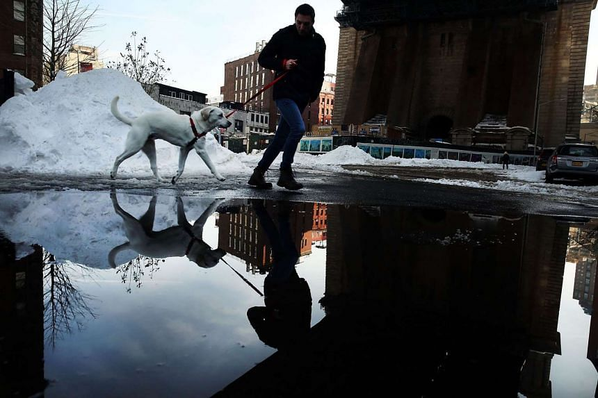 A man and his dog walk under the Manhattan bridge in Brooklyn on the first workday following a blizzard that set a new single-day record for snowfall in both New York and Washington DC on Jan 25, 2016.