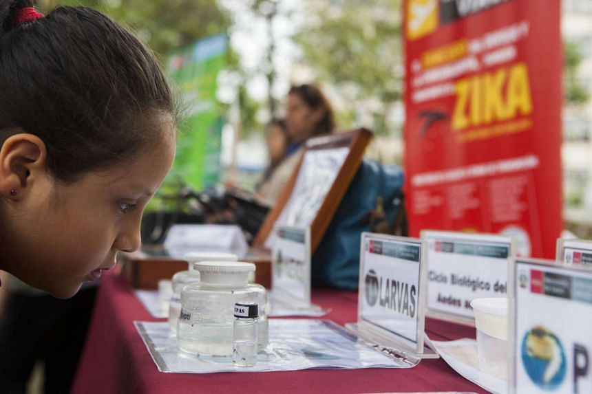A child looks at information on the mosquitos that transmit Zika in Lima, Peru, on Jan 27, 2016.
