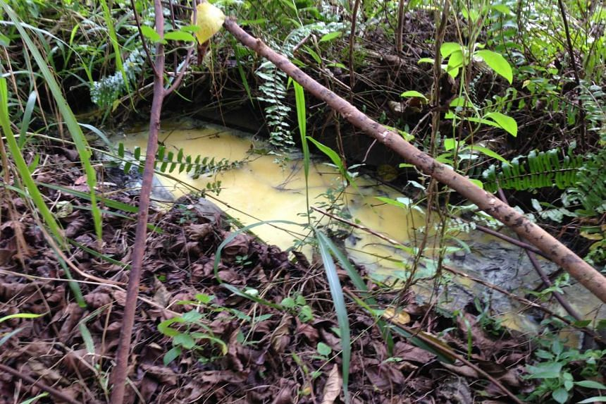 The oil has collected in the drain at the bottom of the BKE bridge