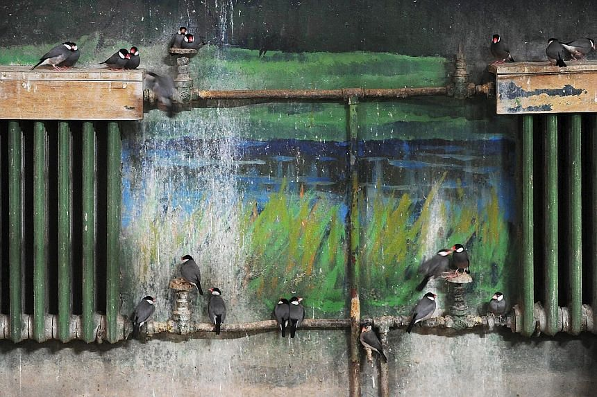 Birds resting on heating pipes in sub-zero temperatures at the Beijing Zoo on Jan 22. A cold front last weekend saw temperatures plunging across China to 30-year lows.