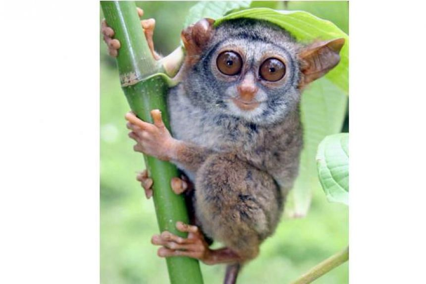 An airport policeman was caught allegedly trying to smuggle 47 rare animals or birds to Japan, including 11 tarsiers.