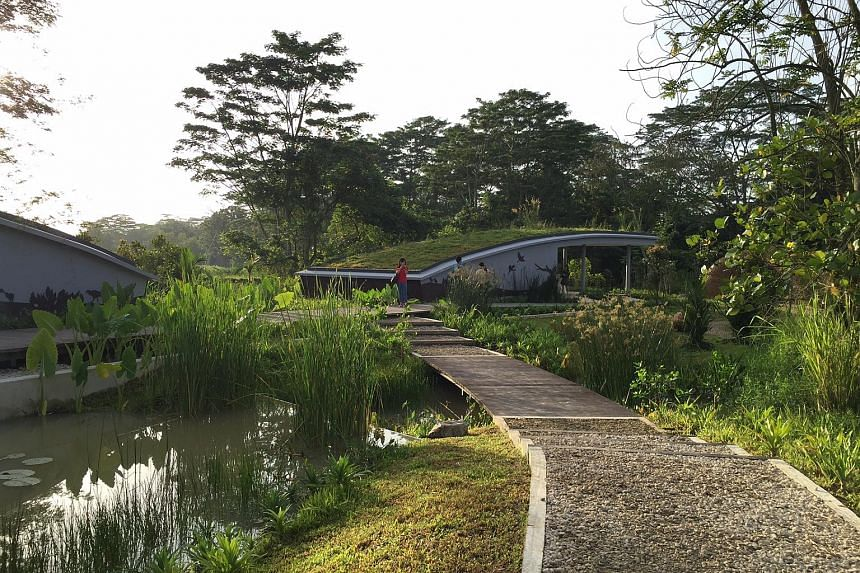 The part of the Kranji Marshes which is open to the public.
