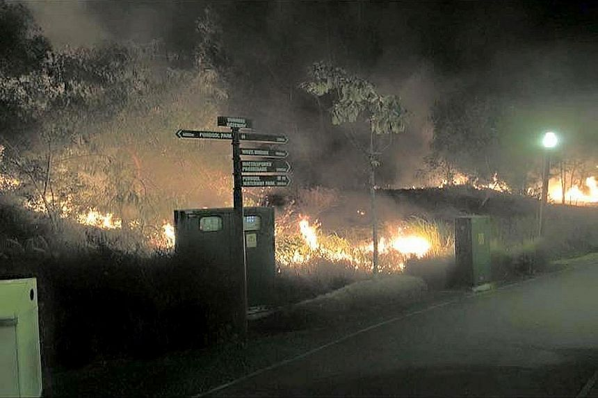 The police were alerted at about 10.50pm last Saturday to a fire which broke out along Punggol Waterway Park. Five suspects aged between 14 and 20 have been arrested.
