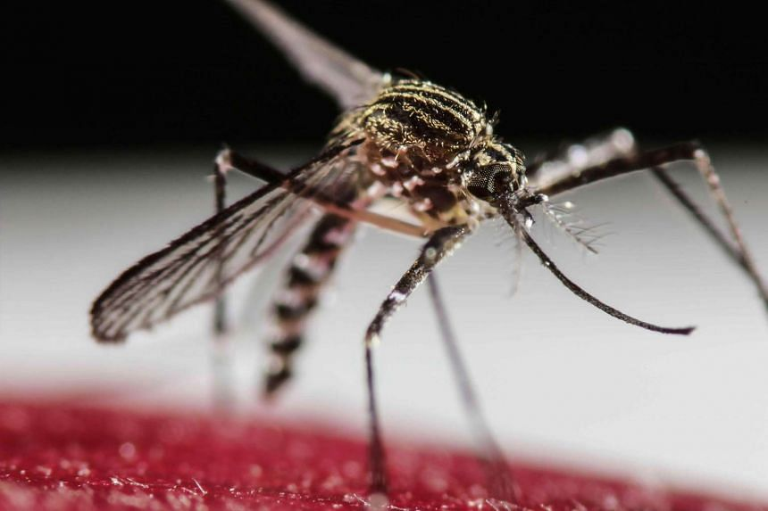 Officials stressed that it was unlikely the virus would establish local transmission from the mosquitoes at Sydney International Airport.