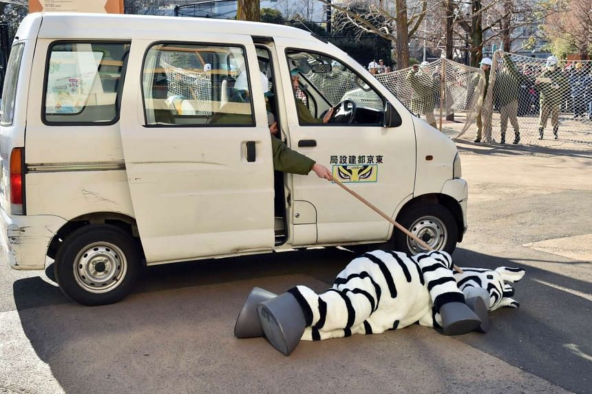A zookeeper dressed as a zebra is surrounded by zookeepers during a drill to practise what to do in the event of an animal escape at the Ueno Zoo in Tokyo on Feb 2, 2016. About 150 zookeepers participated in the annual drill.
