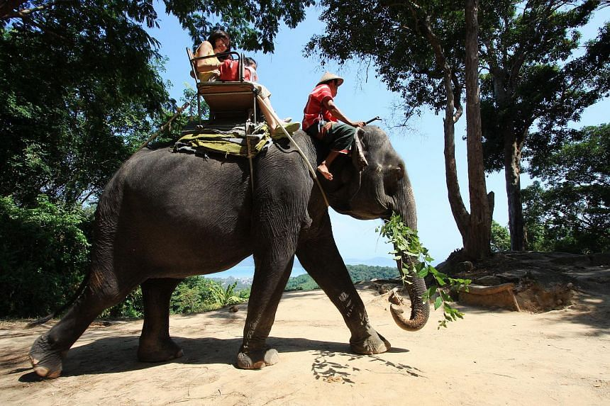 Tourists on an elephant ride in Phuket, Thailand.