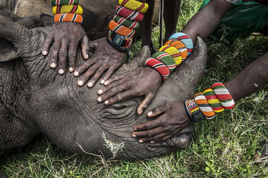 A group of young Samburu warriors encountering a rhinoceros for the first time. Most people in Kenya never get the opportunity to see the wildlife that exists in their own backyard.