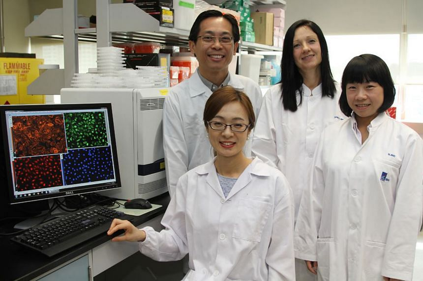 (Clockwise from bottom left) Dr Ran Su, Dr Lit-Hsin Loo, Dr Daniele Zink and Dr Sijing Xiong, from A*Star's Bioinformatics Institute and Institute of Bioengineering and Nanotechnology, developed the first high-throughput imaging platform for predicti