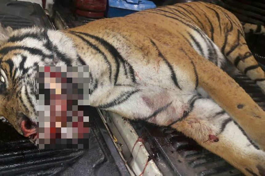Fences had been put up along the highway to prevent animals from being killed, a Malaysian highway official said.