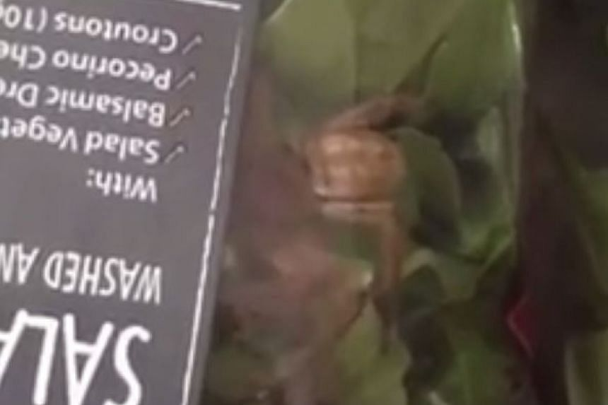 The giant Huntsman spider was seen moving in a bag of Woolworths' Italian-style salad mix.