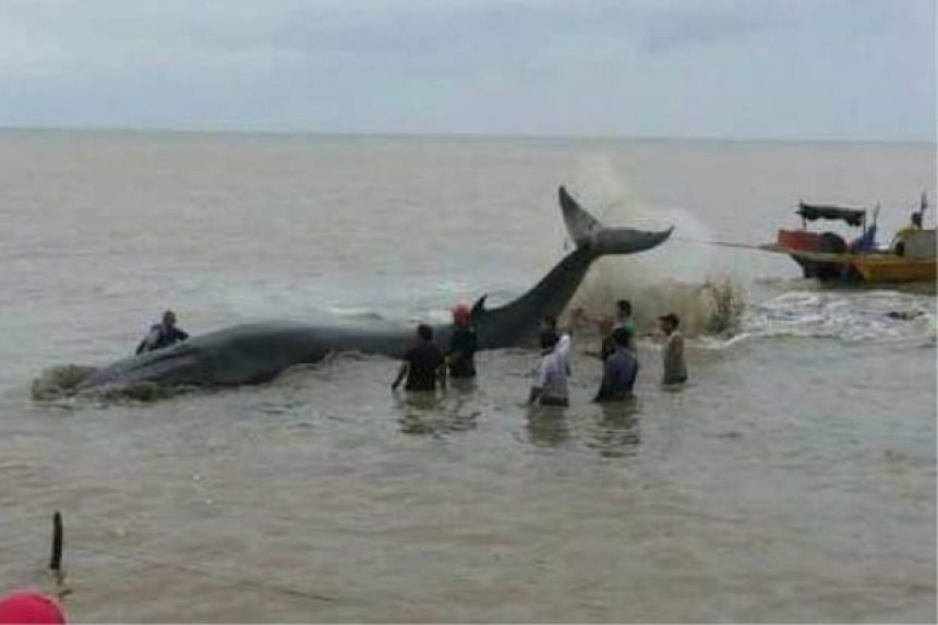 A 20m whale was sighted along the coastal area of Johor on Monday, Feb 8.