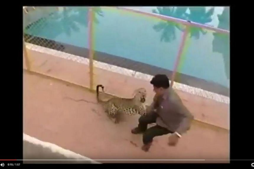 A stray leopard injured six people in an attack at a school in Bangalore before it was captured by officials.