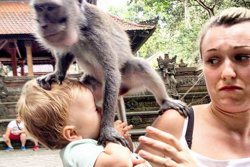 An over-friendly monkey jumping on Esme in the Monkey Forest in Bali's Ubud.