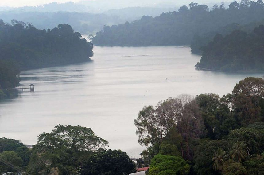 The Central Catchment Nature Reserve includes reservoirs like MacRitchie (left), Upper Seletar, Upper Peirce and Lower Peirce, and is home to critically endangered species of wildlife.