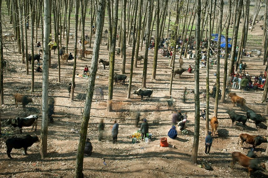FIRST PRIZE, DAILY LIFE CATEGORY, SINGLES. Yi villagers holding a cattle market in a forest near Liangshan in Sichuan province in November 2014. The Yi ethnic minority live largely by agriculture, livestock herding and hunting. There are around 7.5 m