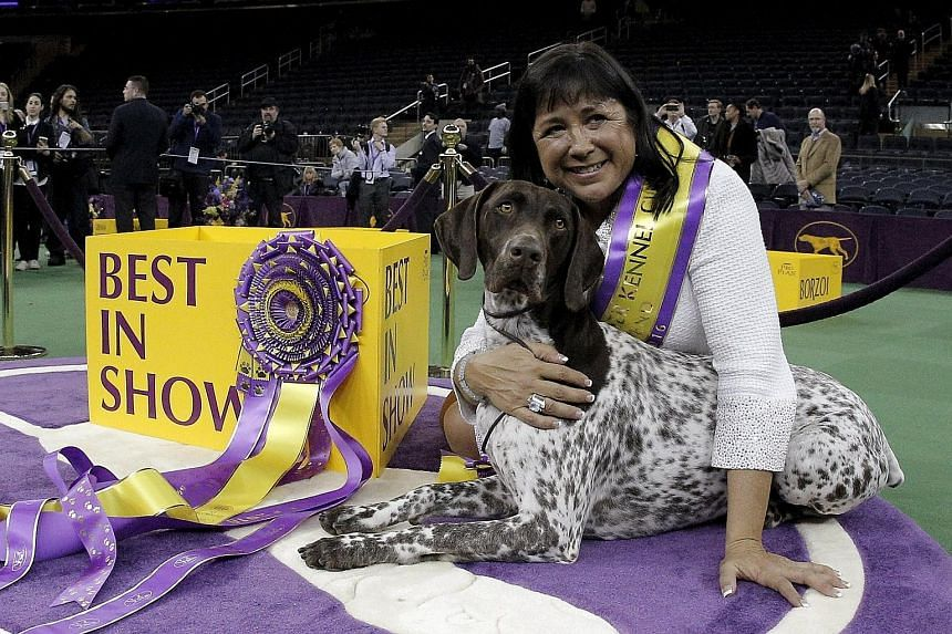"German shorthaired pointer CJ posing with owner Valerie Nunes-Atkinson after winning ""Best in Show"" at the 140th Westminster Kennel Club dog show in New York City's Madison Square Garden on Tuesday. CJ, short for California Journey, beat more than 2,"