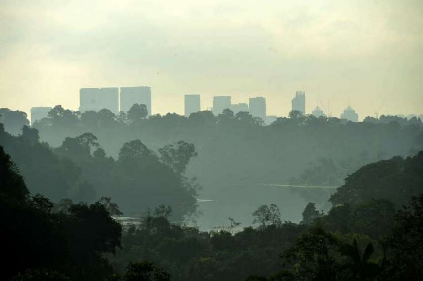 View of the Central Catchment Nature Reserve from Jelutong Tower.