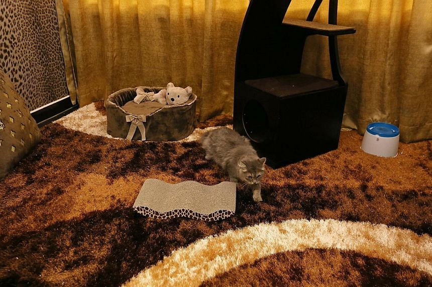 Chandeliers, Roberto Cavalli wallpaper, designer beds, pumped-in purified air and Swarovski crystal dining bowls that cost up to $225 each are some of the features found at the Purrfection Suites, which cater to cats in need of a pampering. Featuring