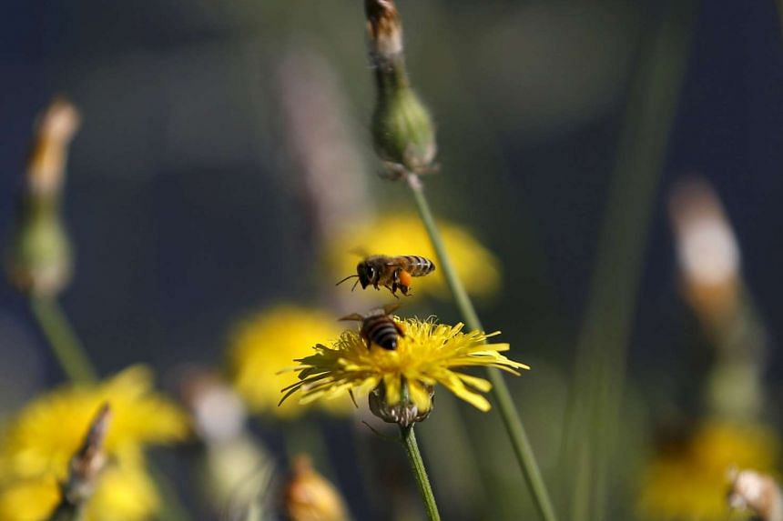 The declining population of bees poses potential risks to major world crops, a United Nations body on biodiversity said.