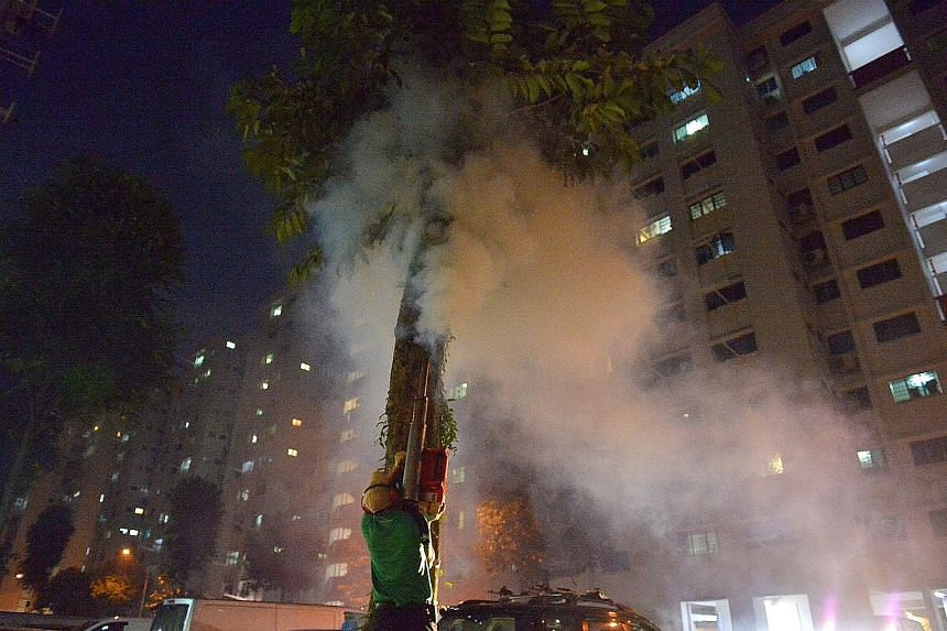 Pest management professionals fogging a tree in Yishun Street 71. The chemical causes a brief burning feeling in mynahs' faces, mouths, and throats.