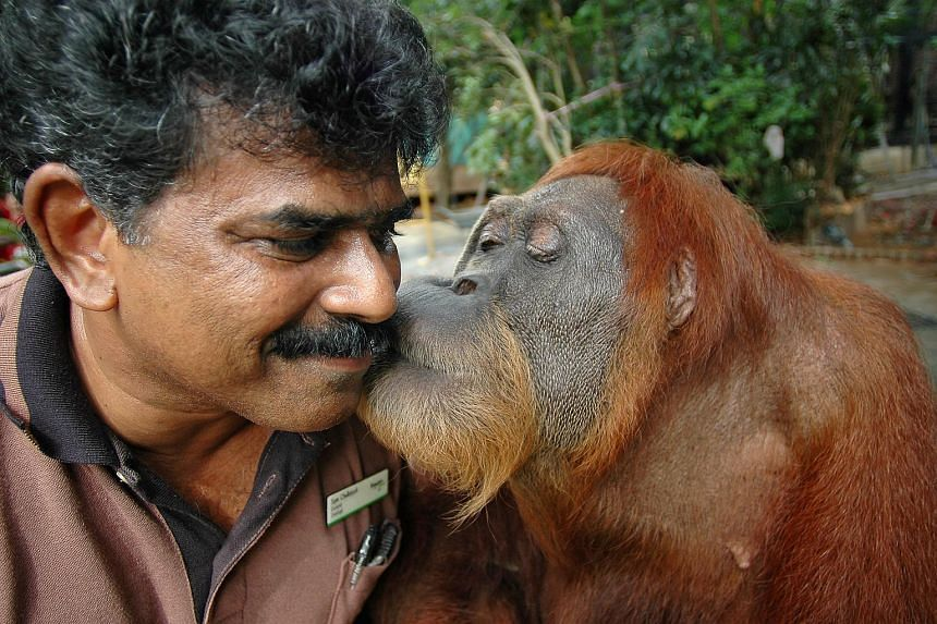 Ah Meng giving her minder Sam Alagappasamy, 56, a peck on the cheek.