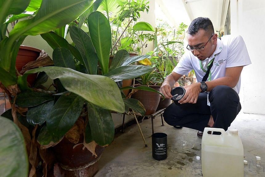 An National Environment Agency officer showing how Aedes mosquitoes caught are removed from a trap.