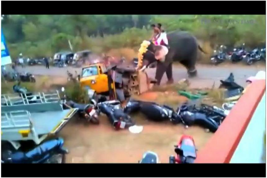 An elephant ran amok during a festival in Kerala, India on Feb 25, 2016.