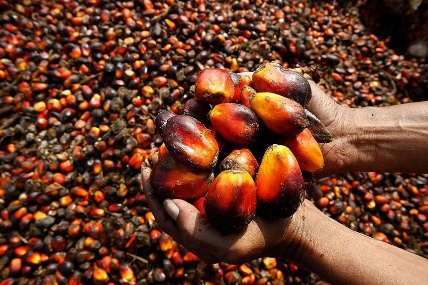 Dry weather in Indonesia resulted in only a marginal increase in output last year, while crude palm oil prices fell from US$768 per tonne to US$574 per tonne. Lower average prices led to the firm's revenue falling 15 per cent to US$1.55 billion from