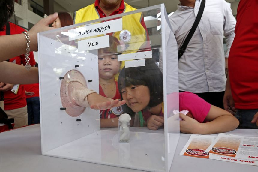 Ng Xin Yi, six, and Andrea Tay, seven, watching an experiment involving the Aedes aegypti mosquito at the Do the Mozzie Wipeout Campaign, held at Tampines West Community Club on Sunday. From March 14, a home owner will be fined $200 if mosquitoes are foun