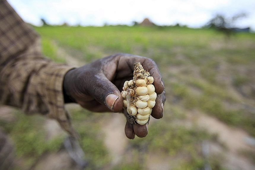 Climate change effects are expected to reduce the amount of food harvested, which could lead to higher food prices and reduced consumption, according to a study published in medical journal The Lancet.
