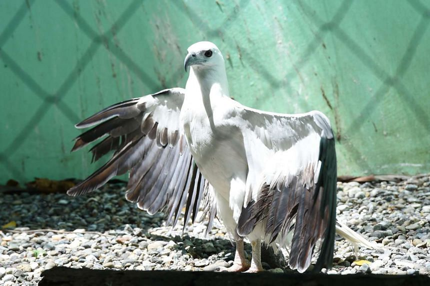 Sri Lankan police arrested two men for torturing a sea eagle after pictures on social media shows the bird being skinned alive.