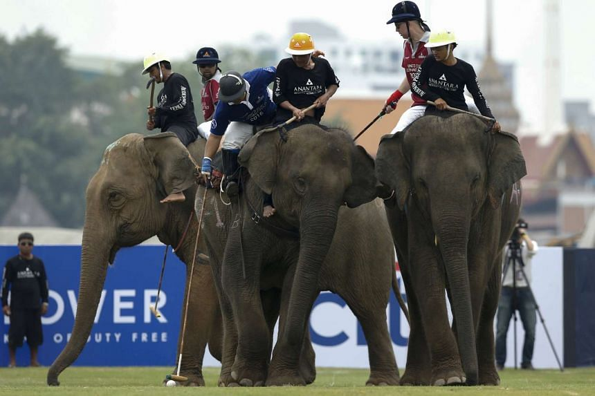Players take part in an exhibition match during the annual charity King's Cup Elephant Polo Tournament in Bangkok, Thailand on March 10, 2016.