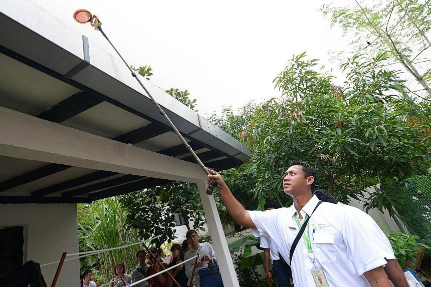 The authorities have stepped up inspections (above) and public education campaigns, and are also rolling out more traps to try and keep the mosquito population under control as Singapore could see its worst dengue outbreak this year.