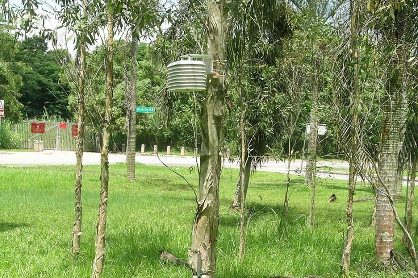 A temperature and humidity sensor is attached to a tree in Lim Chu Kang as part of a National University of Singapore study on the urban heat island effect in Singapore.