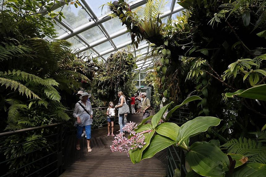 SINGAPORE ORCHID HAVEN: National Orchid Garden
