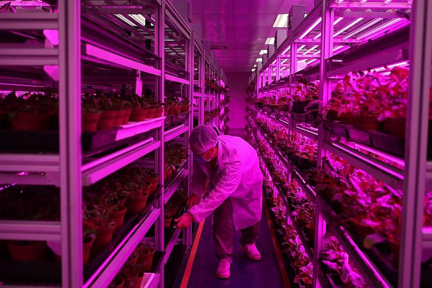 Panasonic has converted its storage facility into an agricultural plant.