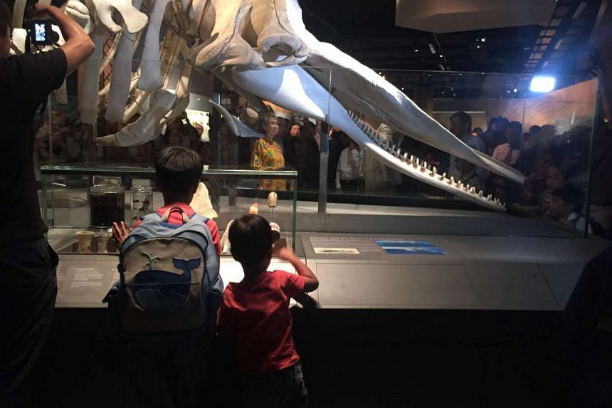 Visitors can get a closer look at the Singapore whale at the Lee Kong Chian Natural History Museum.