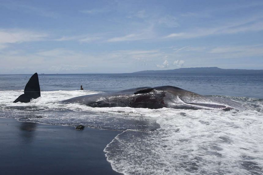 The 16.2m long sperm whale carcass was found by two fishermen on the morning of March 14, 2016.