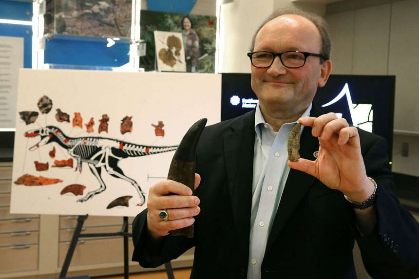 Paleontologist, Hans Sues of the Smithsonian Museum of Natural History compares a T-Rex tooth (left) to the tooth of a newly discovered dinosaur  in Washington, DC on Monday.