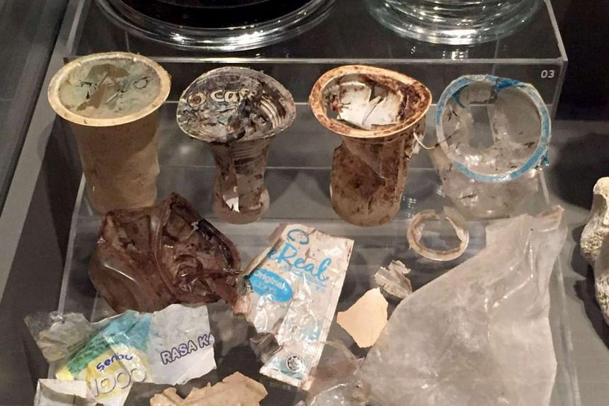 Items found inside the whale's skeleton.